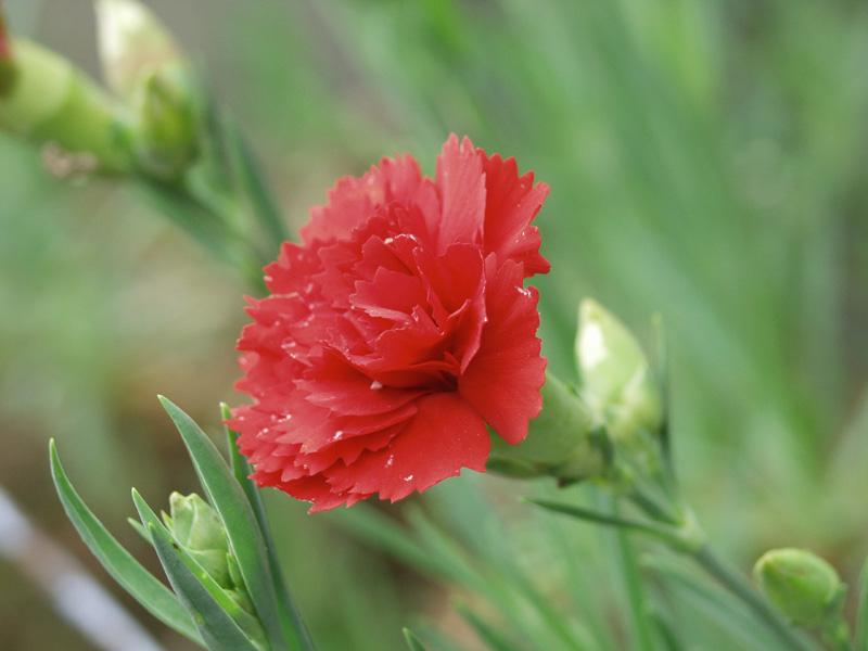 2月16日の誕生花・花言葉 - 誕生花・花言葉辞典