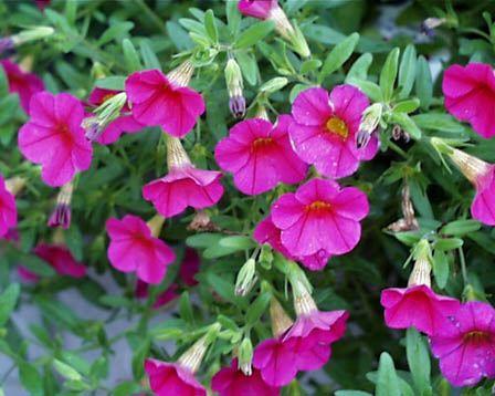 6月日の誕生花 花言葉 誕生花 花言葉辞典